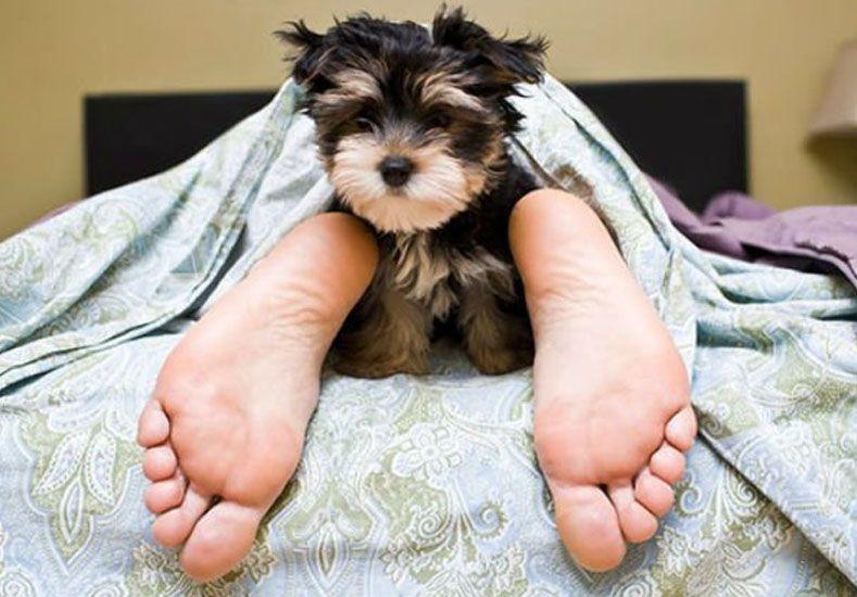 Aseguran que se duerme mejor con perros o gatos en la cama