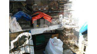 Tráfico y tenencia ilegal: secuestraron aves, jaulas y trampas en la ciudad