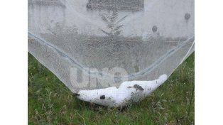 En imágenes: así fue el granizo que afectó una localidad de San Rafael