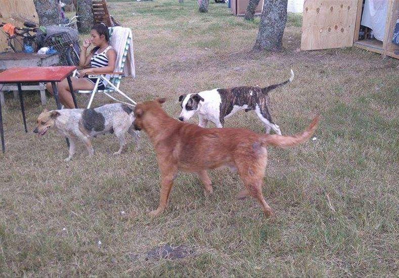 Desde Dignidad Animal piden la colaboración de los santafesinos para asistir también a los animales.