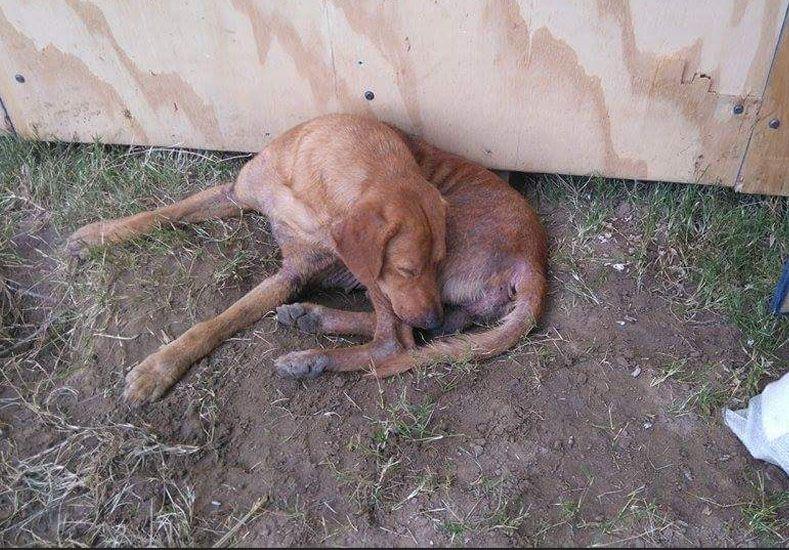 Piden donaciones de alimento para los animales que están en los centros de evacuados
