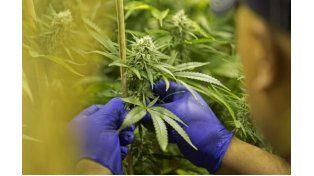 Colombia reglamenta el uso del cannabis con fines medicinales