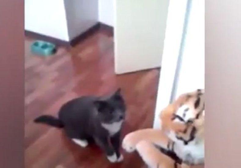 El gato boxeador que arrasa pegándole a un peluche