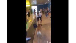 Un perro se emocionó al ver a su dueño después de 3 años y revolucionó la web