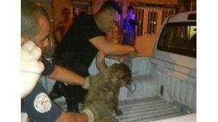 Un policía le salvó la vida a un perro con respiración boca a boca