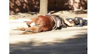 La imagen del policía acariciando a Charlotte en sus últimos momentos se hizo viral./ Facebook de la organización Animal justice League.