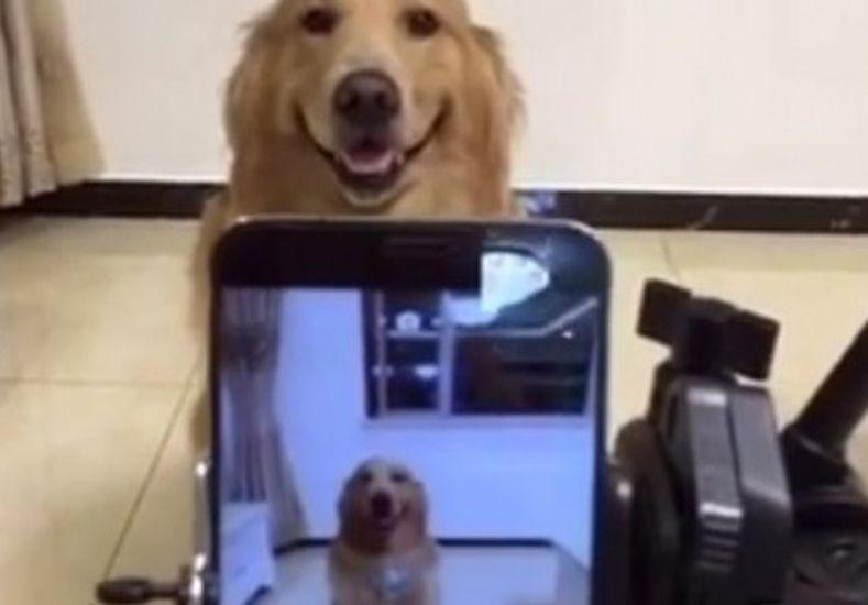 El perro que sonríe cuando le toman fotografías