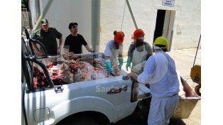 Secuestraron más de 1500 kilos de carne vacuna no apta para consumo humano
