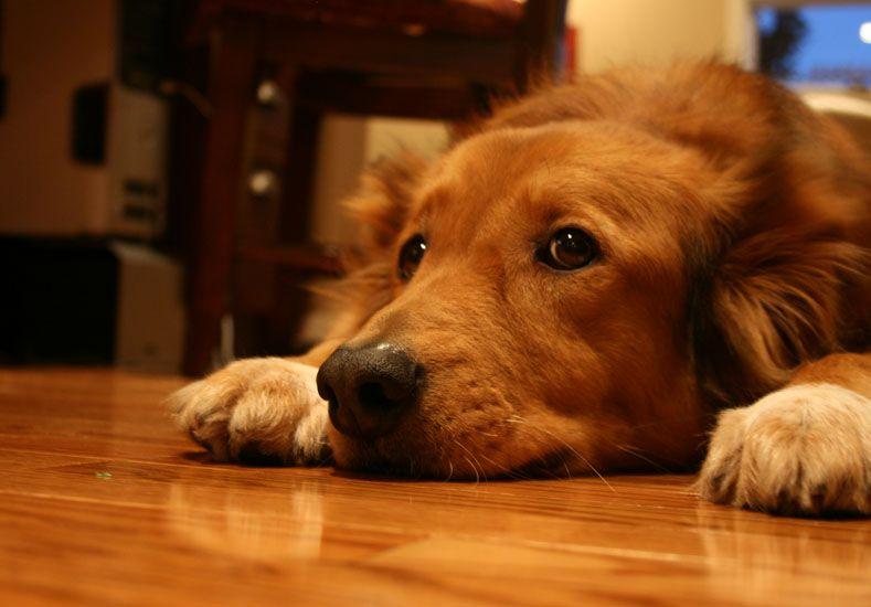 Recomiendan para las fiestas dejar a las mascotas en un espacio sin ruidos