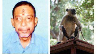 Munna Mirsha fue asesinado por monos
