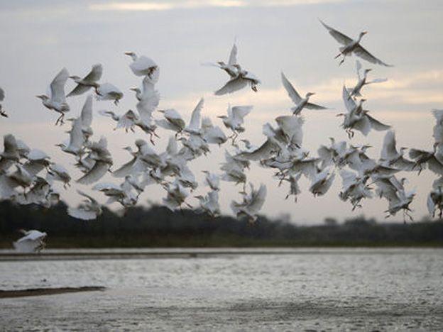 Simulador de vuelo crea sensación de ser pájaro