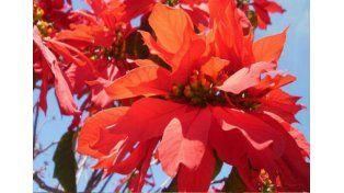 Las 10 plantas venenosas que pueden estar en tu jardín