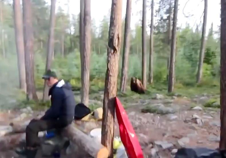 Acampaban, se les acercó un oso y lo alejaron de una extraña manera...