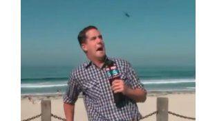 Periodista enloquece en vivo al ver un gigantesco insecto volador