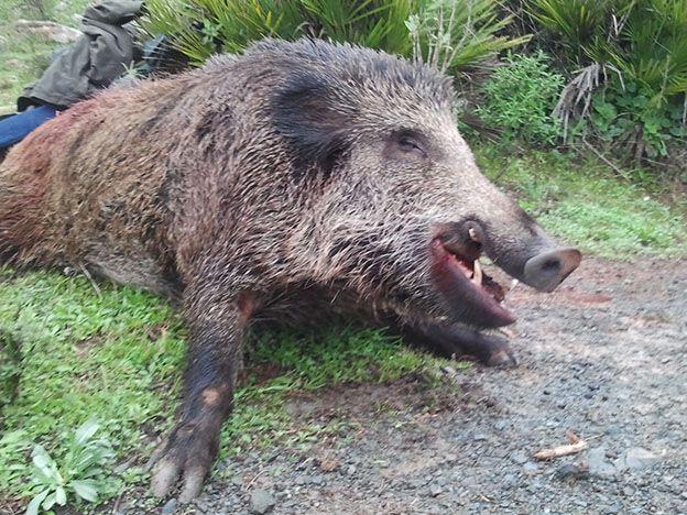 Estaba cazando y lo mataron al confundirlo con un jabalí