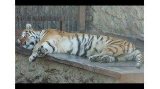 Costa Rica cerrará zoológicos y liberará animales