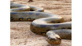 La anaconda más grande del mundo que no era tal