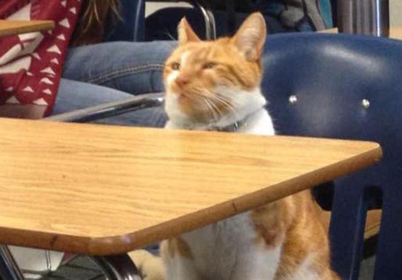 Bubba, el gato que tiene carné de estudiante en una secundaria pública