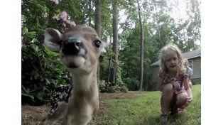 La tierna relación de una nena y un asustadizo Bambi