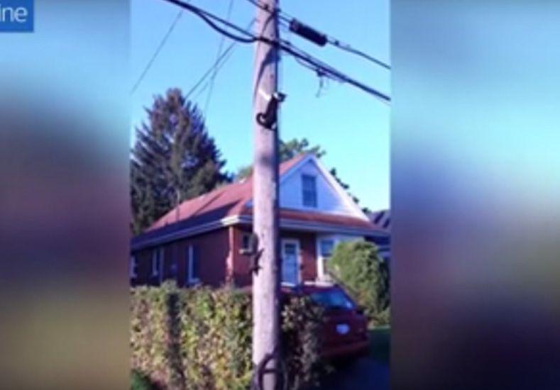 Una inteligente ardilla vuelve loco a un gato arriba de un poste