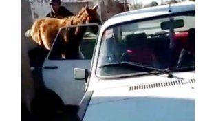 Video: metió un caballo adentro de un R-12