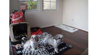 Dos perritos presienten un temblor antes de que toque la superficie