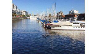 Una sudestada complicó el operativo para guiar a la ballena hacia aguas abiertas