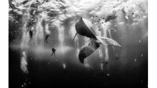 La ganadora: Whale Whisperers. (Anuar Patjane Floriuk / National Geographic Traveler Photo Contest)