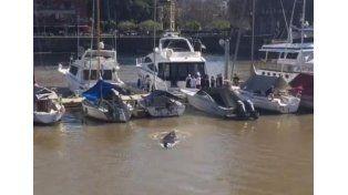 Una ballena llegó a Puerto Madero e inundó de memes las redes sociales