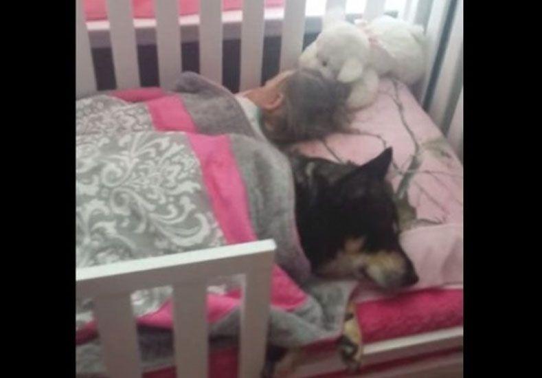 El perro que duerme la siesta en la cuna con una nena