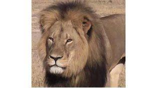 Las últimas fotos del león cecil