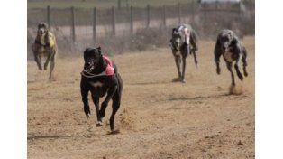 El Congreso avanza para evitar las carreras de perros