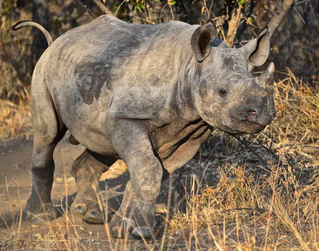 Un orfanato de rinocerontes