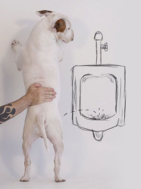 Su esposa lo dejó, pero creó un mundo con su perro