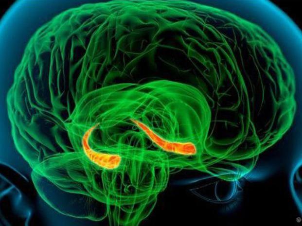 Zona gris. El gráfico destaca el hipocampo en el área del cerebro.