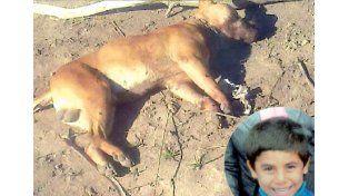 Un pitbull mató a nenito de 8 años