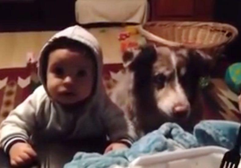 El asombroso perro que aprendió a decir mamá antes que el bebé