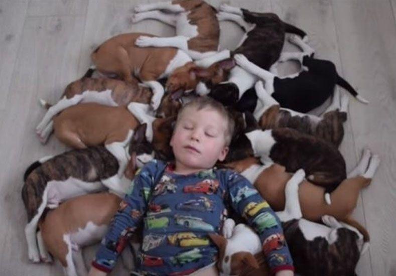 Así es la caótica vida de 16 adorables cachorros de Basenji con dos niños