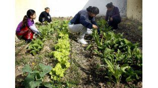 Huertas Urbanas: en 2015 se replicará la experiencia en solares, escuelas y vecinales