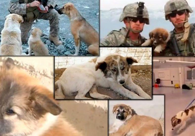 Un soldado se hizo amigo de tres perros que le salvaron la vida