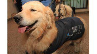 La AFIP aprovechará el Día del Animal para jubilar a 16 perros de la Aduana