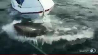 Un tiburón atacó un bote y generó pánico en los tripulantes