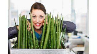 Tener plantas en el trabajo mejora la productividad y reduce el estrés laboral