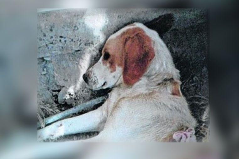 Un perro fue apuñalado al intentar evitar el robo a su dueña