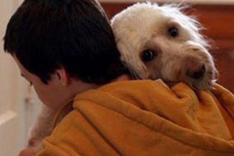 El vínculo del perro y su dueño es similar al de madre e hijo