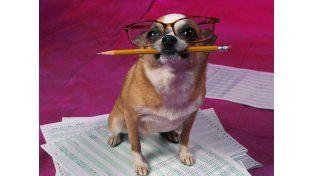 Veinte curiosidades sobre los perros