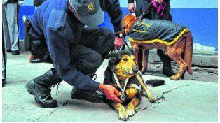"""Jubilaron a """"Corbata"""", el perro rastreador que conmovió al mundo"""