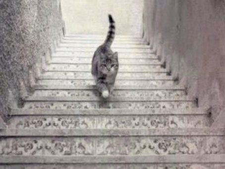 Viral del día: ¿el gato sube o baja?