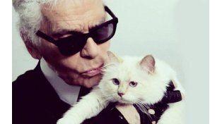 La gata del diseñador Karl Lagerfeld gana tres millones de euros al año