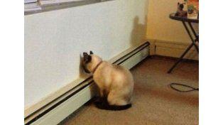 La inusual postura de una mascota que demanda una visita urgente al veterinario